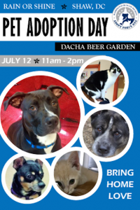 Dacha Adoption Event