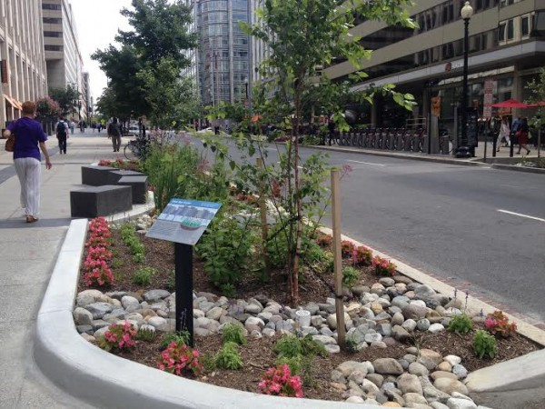 Rain Garden at 19th and L streets NW