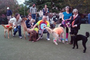 Pet Costume Contest, photo via https://www.facebook.com/HDCMS