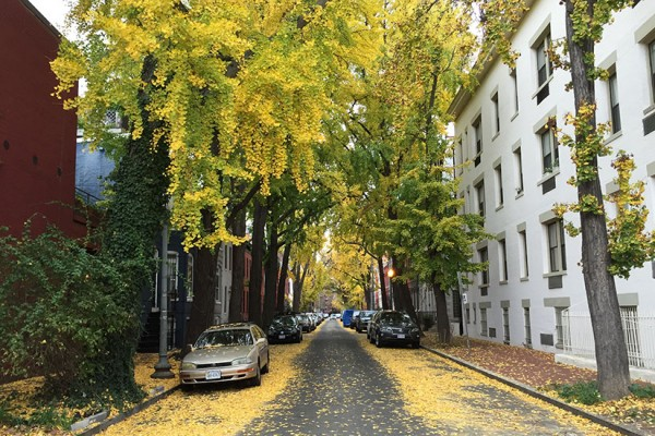 Caroline Street in the fall