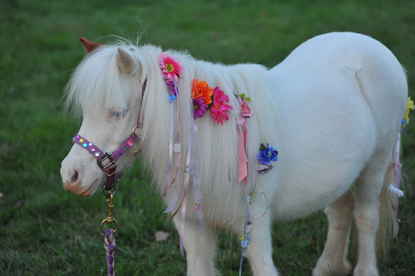 Updated on Friday, Jan. 15: The Peppermint Pony will no longer bring ...