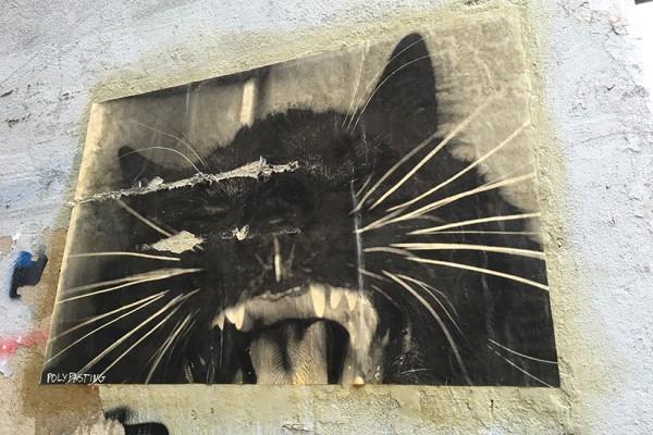 Cat paste