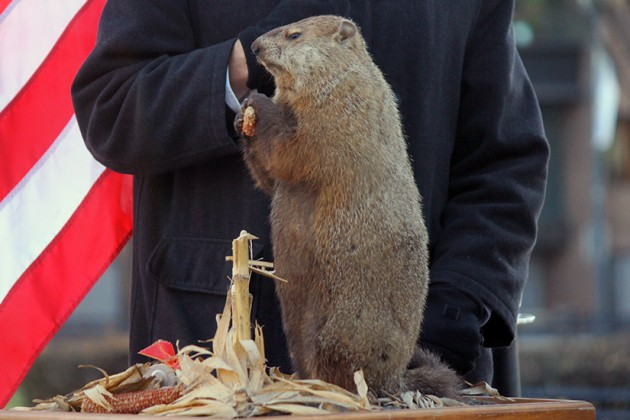 Potomac Phil, Dupont's own Groundhog Day mascot