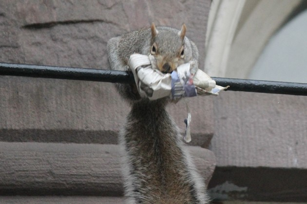 The squirrel struggled to keep its balance on a fire escape ladder