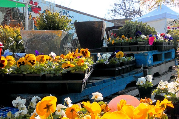 Old City Farm and Guild flowers (Photo via Old City Farm and Guild)