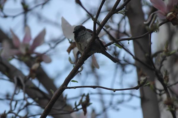 STOCK Bird in tree