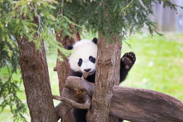 Photo via National Zoo