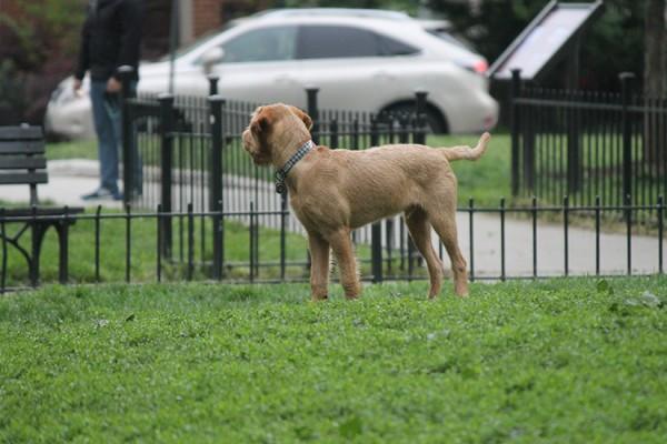 Dog in Logan Circle 2