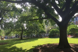 Kalorama Park (Photo via Facebook/ Kalorama Park)