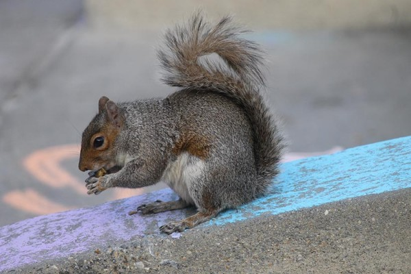 Dupont Circle squirrel BRIEF