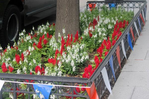 Flower box K Street NW