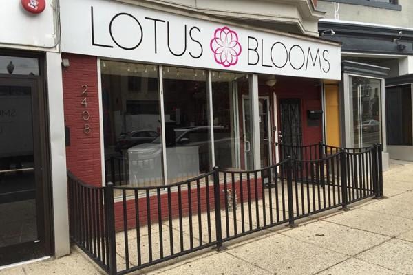 Lotus Blooms in Adams Morgan