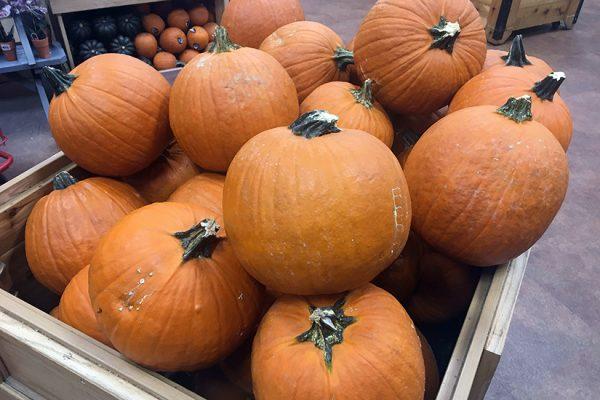 pumpkins-at-trader-joes