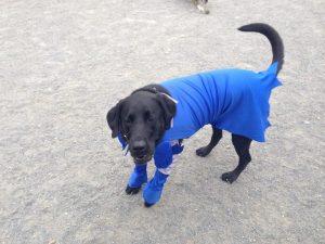 Bat dog, photo via Facebook / Shaw Dog Park