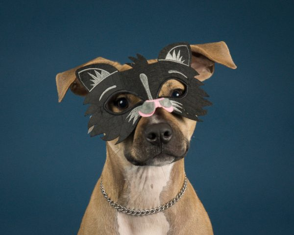 Dog Dressed as a Cat, photo via Outside the Lines Pet Photography