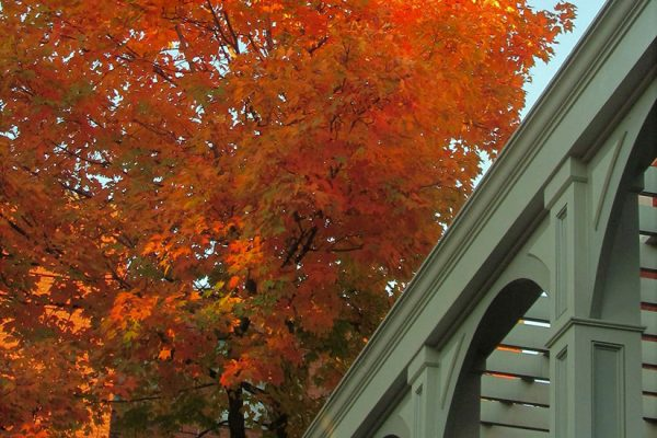 Fall in Logan Circle (Photo via Twitter/Lynn Hoverman)