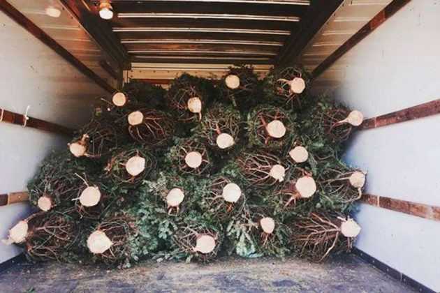 Photo courtesy of DC Tree Delivery