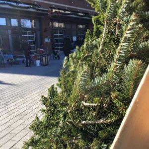 Holiday tree, photo via Columbia Heights Farmers Market