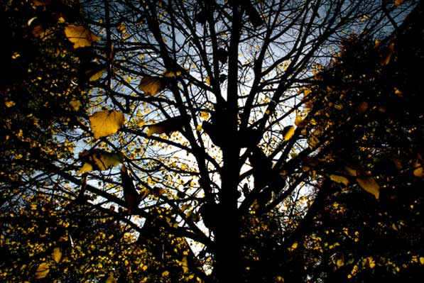 FallLeaves_Borderstan
